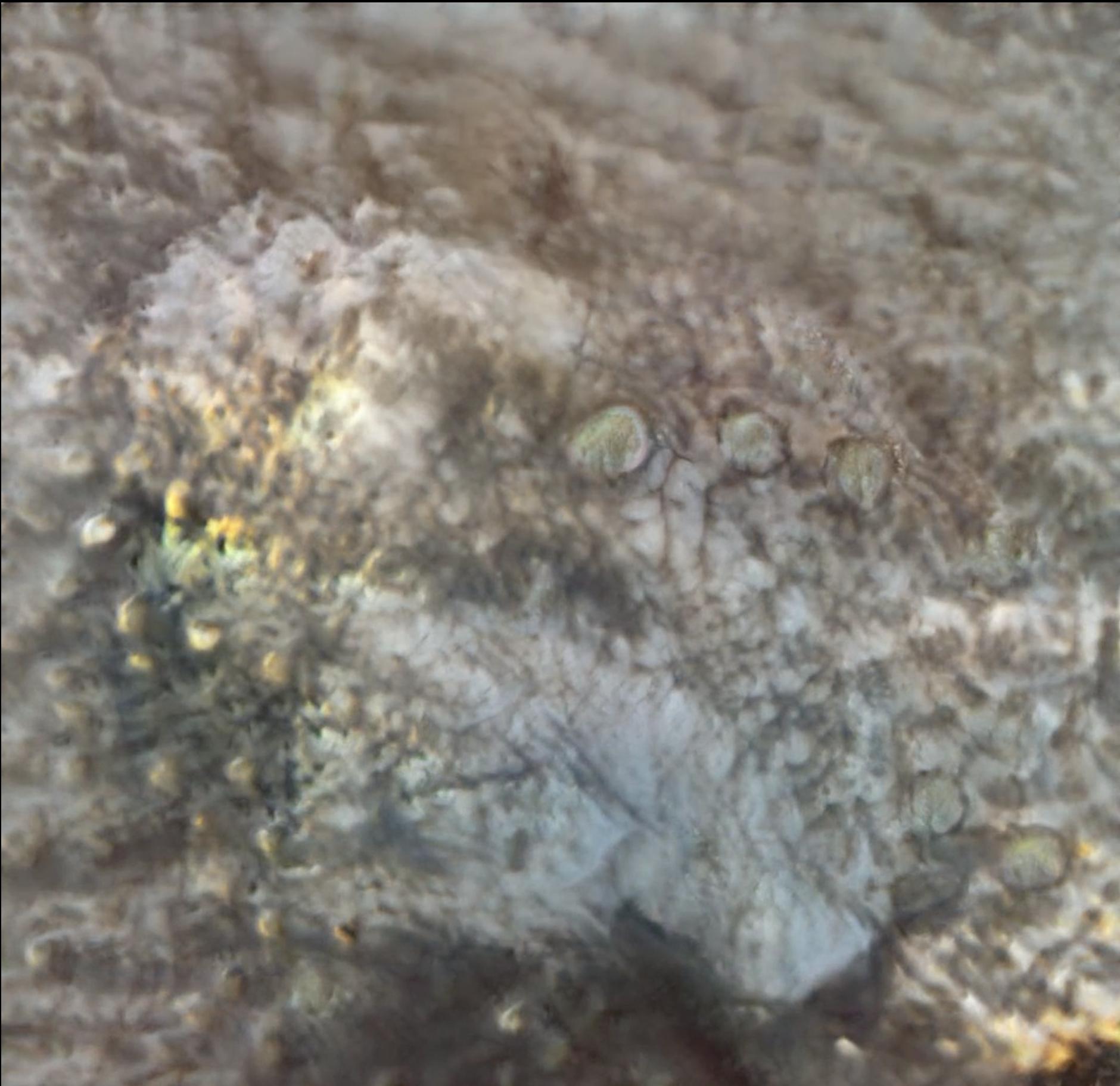 Screenshot-2021-01-13-at-20.01.49